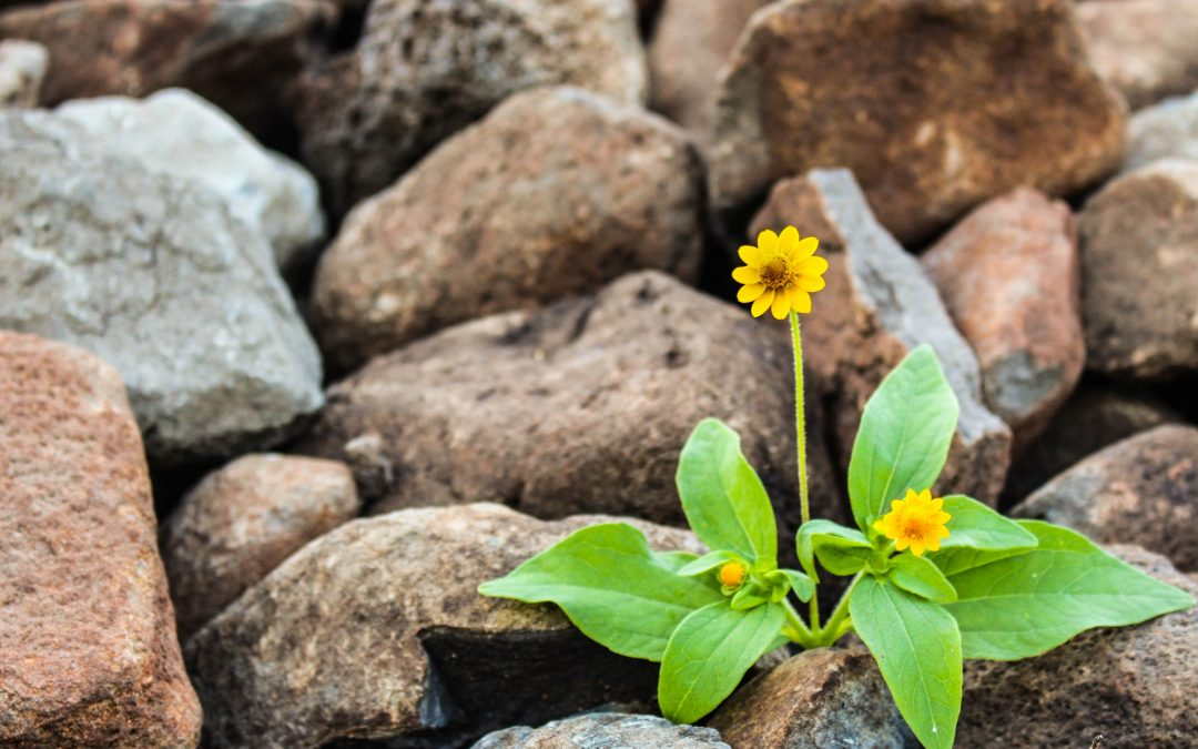 In Konflikt mit dir selbst durch deine Selbstgespräche und wie du das nützen kannst