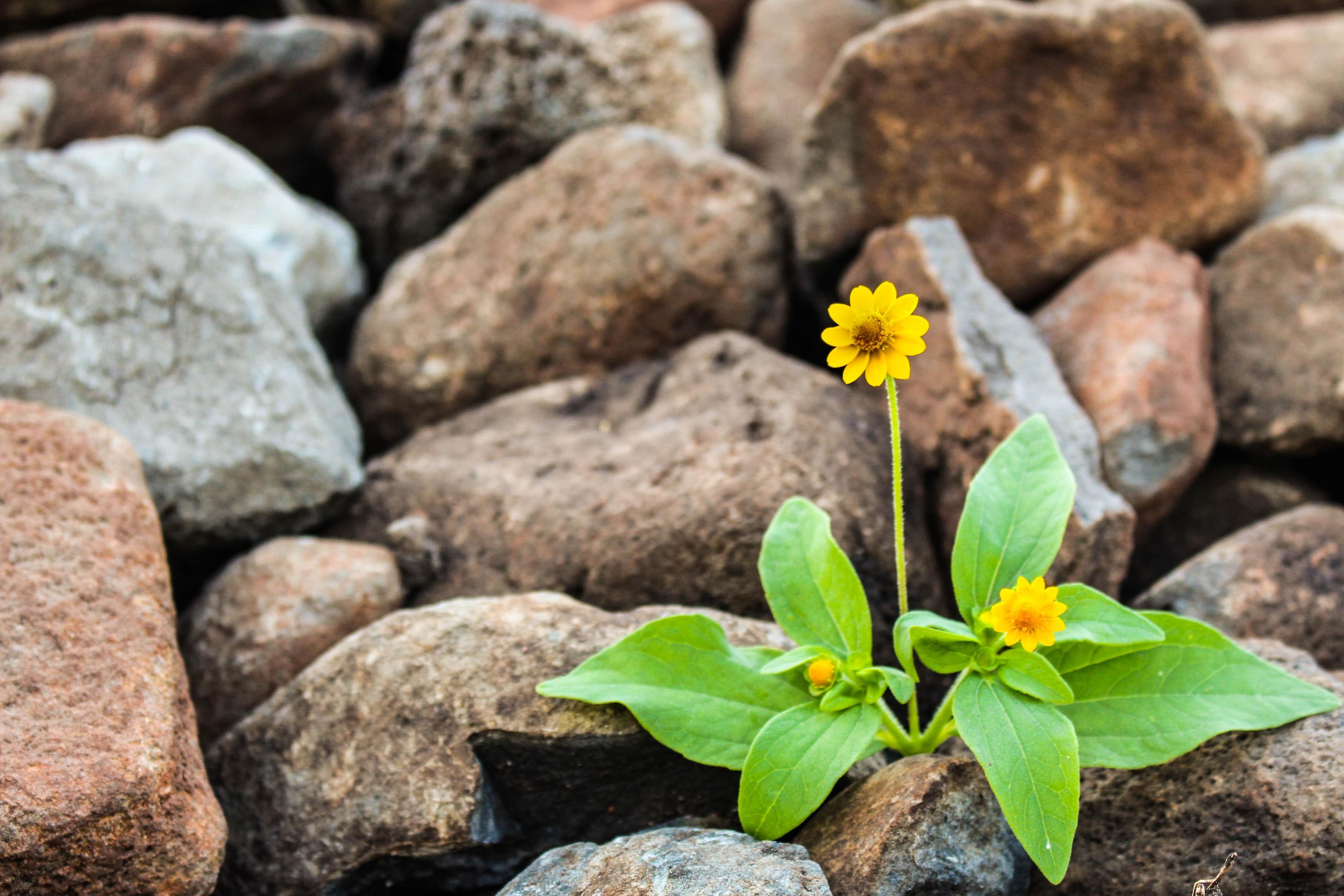 Eine Blume wächst auf Stein, als Symbol für Lebensfreude.